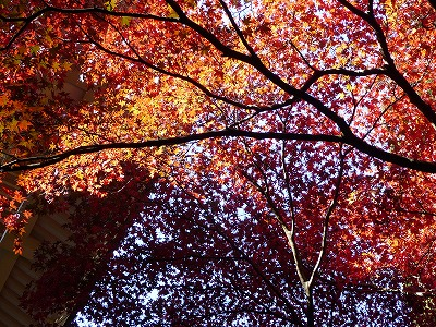 紅葉の天井!